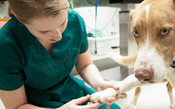veterinar-utbildningen